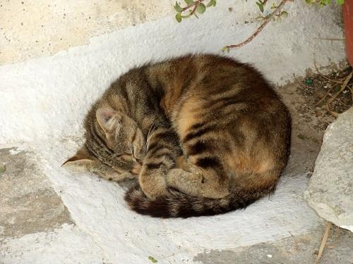 イオス_ホラの猫さん (3)