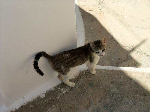 イオス_ホラの猫さん (2)