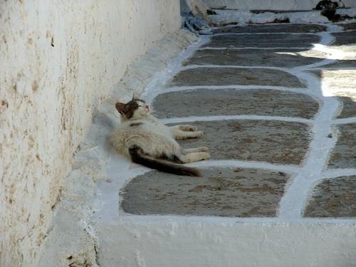 シキノス_カストロの猫さん (2)