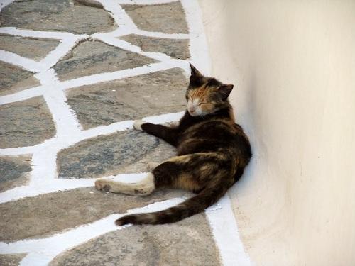 シキノス_カストロの猫さん (1)