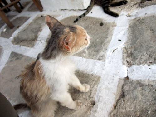 カストロの猫さん (1)