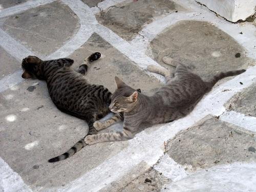 カストロの猫さん (2)