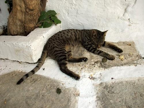 カストロの猫さん (3)