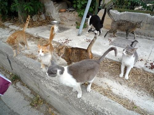 アテネ_猫給食ツアー二日目 (1)