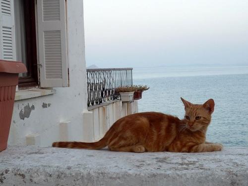 イカリア_アギオス・キリコスの猫さん (3)