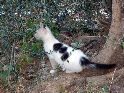 アギオス・キリコスの猫さん