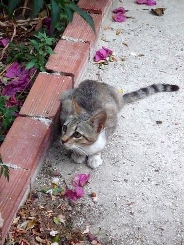 アギオス・キリコスの猫さん (3)