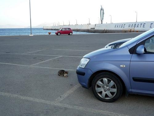 アギオス・キリコスの猫さん (1)
