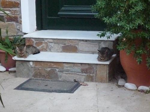 アギオス・キリコスの猫さん (2)