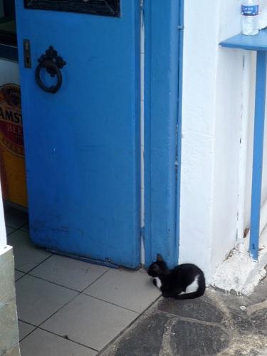 アギオス・キリコスの猫さん (6)