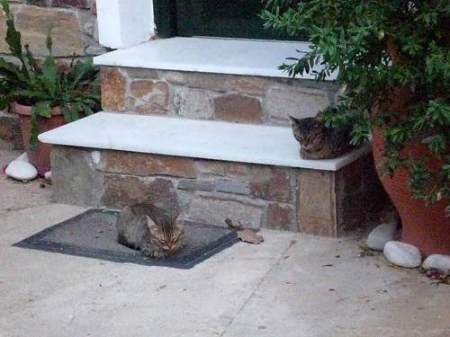 アギオス・キリコスの猫さん (4)