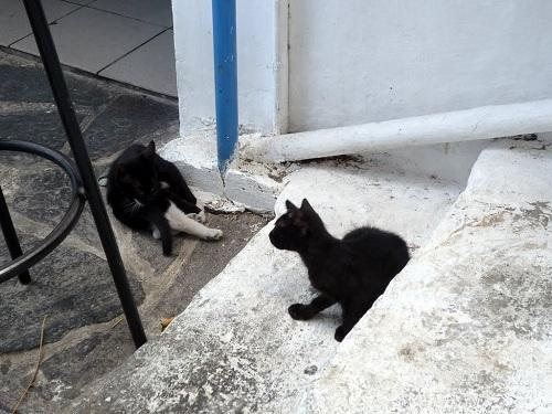 アギオス・キリコスの猫さん (5)
