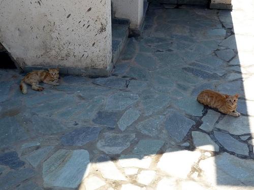 フルニ_カンビの猫さん (2)