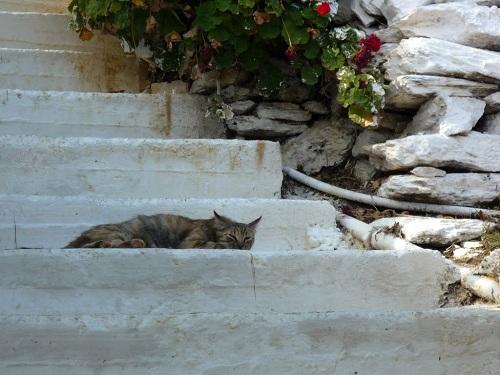 フルニ_カンビの猫さん (3)