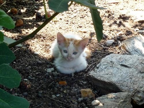 フルニの猫さん (1)