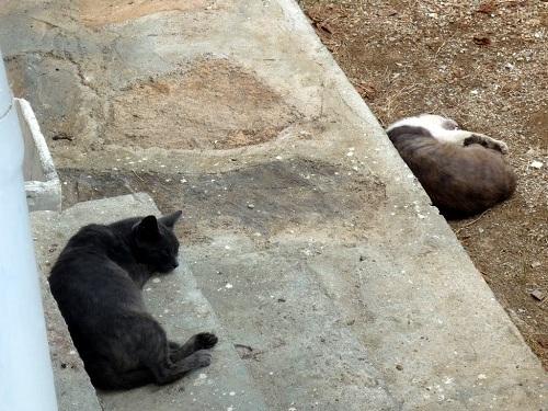 フルニの猫さん (4)