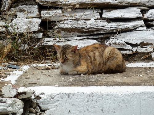 フルニの猫さん (5)