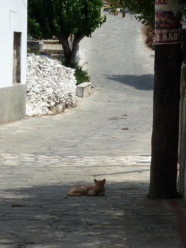 フルニの猫さん (3)