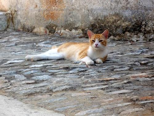 シロス_アノ・シロスの猫 (3)