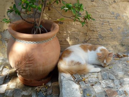 シロス_アノ・シロスの猫 (1)