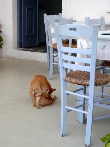 アスティパレア_ペラ・イァロスの猫さん