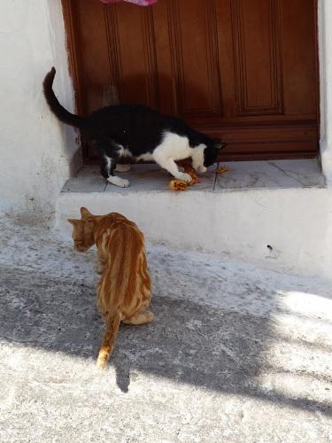 アスティパレア_ホラの猫さん (1)