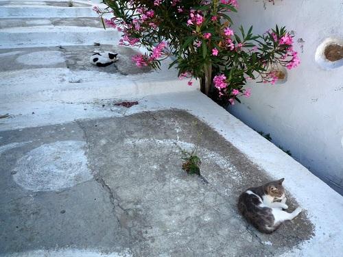 アスティパレア_ホラの猫さん (2)