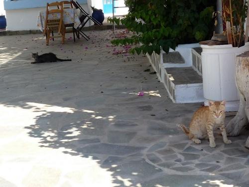 アスティパレア_アナリプシの猫さん