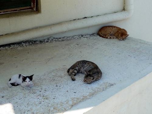 ニシロス_ホテルに居候の猫さんたち (2)