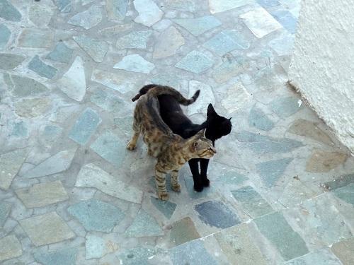 ニシロス_ホテルに居候の猫さんたち (1)