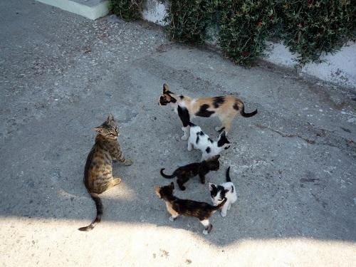 ニシロス_ホテルに居候の猫さんたち (5)