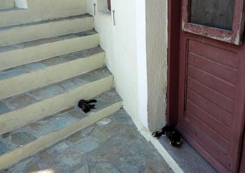 ニシロス_ホテルに居候の猫さんたち (3)