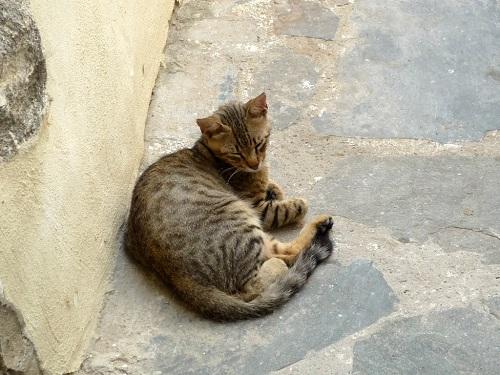 ニシロス_マンドラキの猫さん (2)