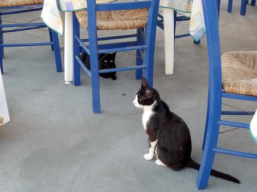 ニシロス_マンドラキの猫さん (1)