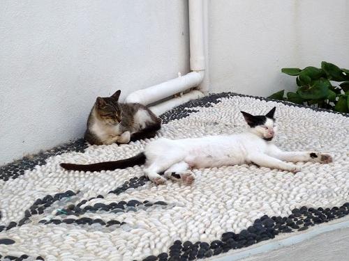 ニシロス_マンドラキの猫さん (3)