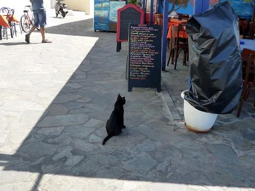 ニシロス_マンドラキノの猫さんたち (3)
