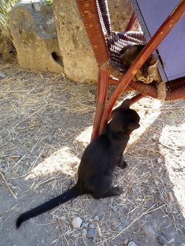 コス_古代アゴラの猫さん (2)