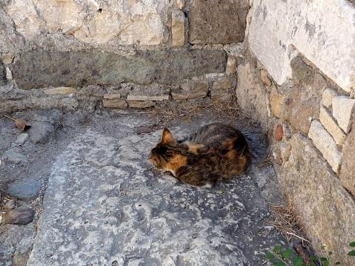 騎士団の城にいた猫さん (2)