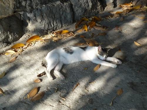 コス・タウンの猫さん (2)