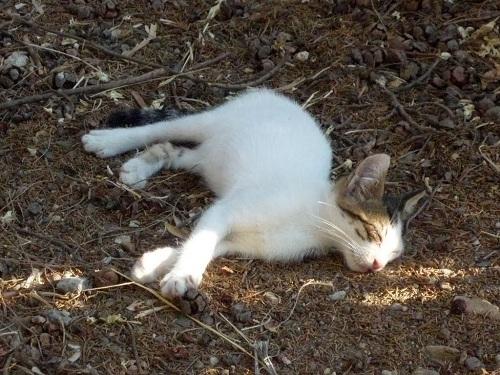 コス_古代アゴラの猫さん (1)