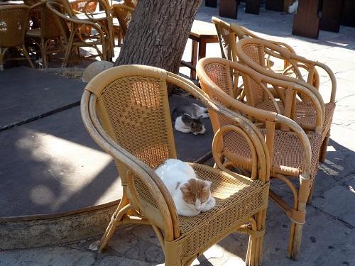 コス・タウンの猫さん