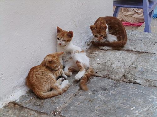 シミ_カリ・ストラータの猫さん (2)