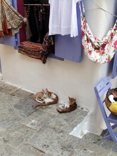 シミ_カリ・ストラータの猫さん (3)