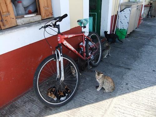 シミ_イァロスの猫さん (2)