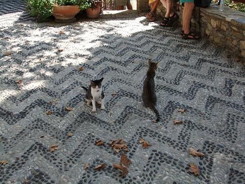ティロス_パンテレイモナス修道院の猫さん (2)