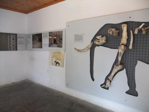 ティロス_博物館 (1)