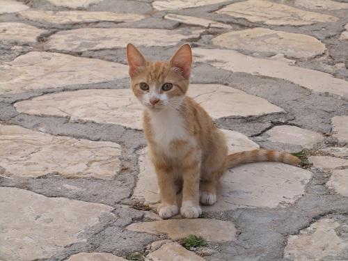 カステロリゾ_賢そうな猫さん