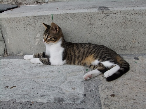 ニシロスの猫さん (1)