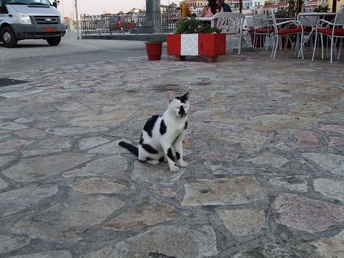 ハルキの猫さん (2)