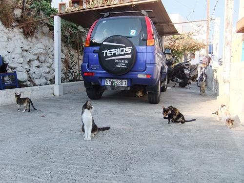 ニシロスの猫さん (2)
